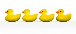 duck row